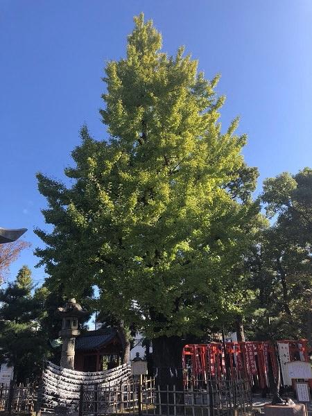 2019.11.14_岐阜県_八幡神社_005.jpg